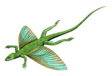 reptiles raros del permico Coelurosauravus