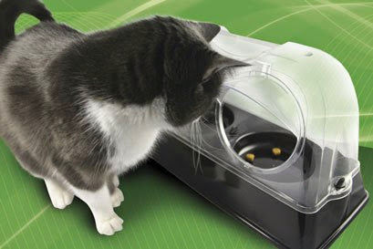 Coolest and Awesome Cat Gadgets (15) 10