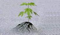 Biljna Medicina - sve o ljekovitom bilju...