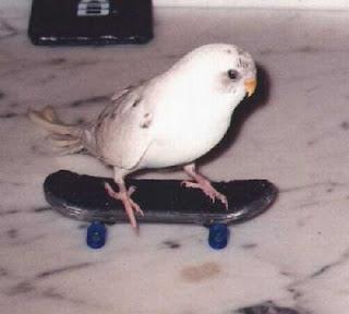 Pássaro a andar de skate