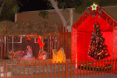 Decorated Christmas Crib and Xmas Tree Photo Gallery