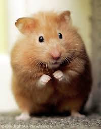 Alzheimer's Hamster Within YOU