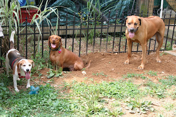 Happy Diggers (Rest in peace Diesel and Grady)