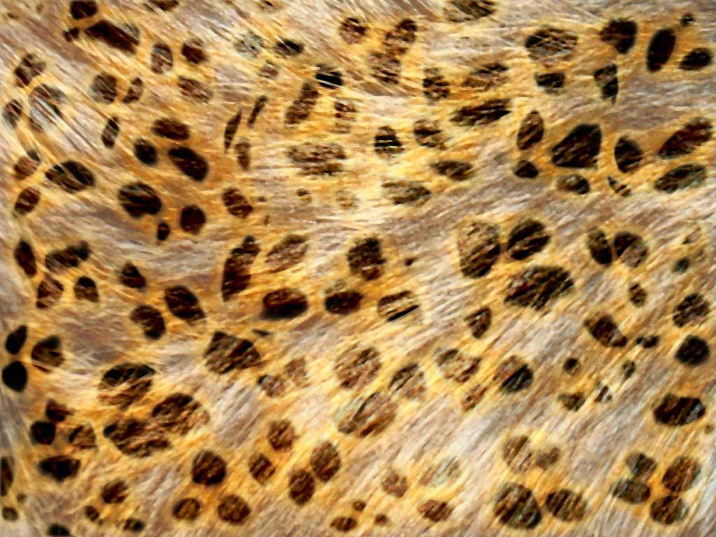 Amper bae leopard print backgrounds for Leopard print wallpaper