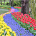 Colorful Tulips Flowers images