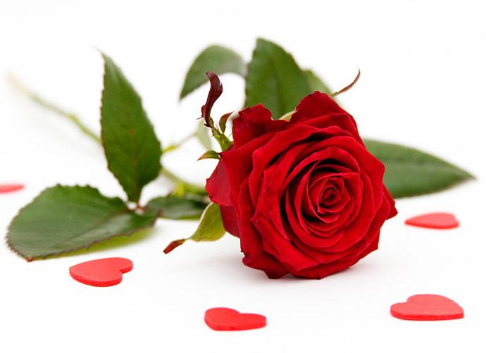 rose flower wallpaper beautiful rose wallpapers beautiful roses ...