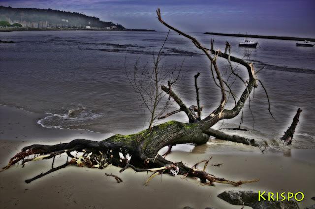 tronco varado en playa tras temporal