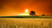 #4 Sunset Wallpaper