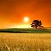 HD Summer Sunset desktop wallpaper