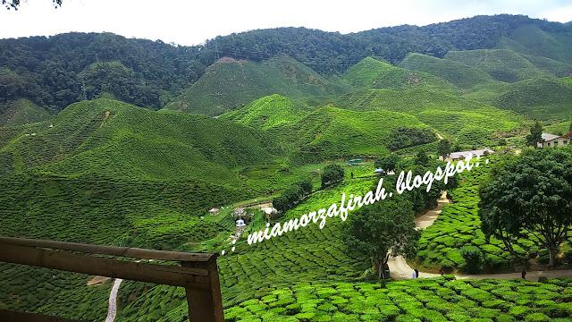 Brichang, Cameron Highlands, short vacay, hotel bajet Cameron, hotel murah, ladang teh bharat, tanah rata, cameron valley tea,