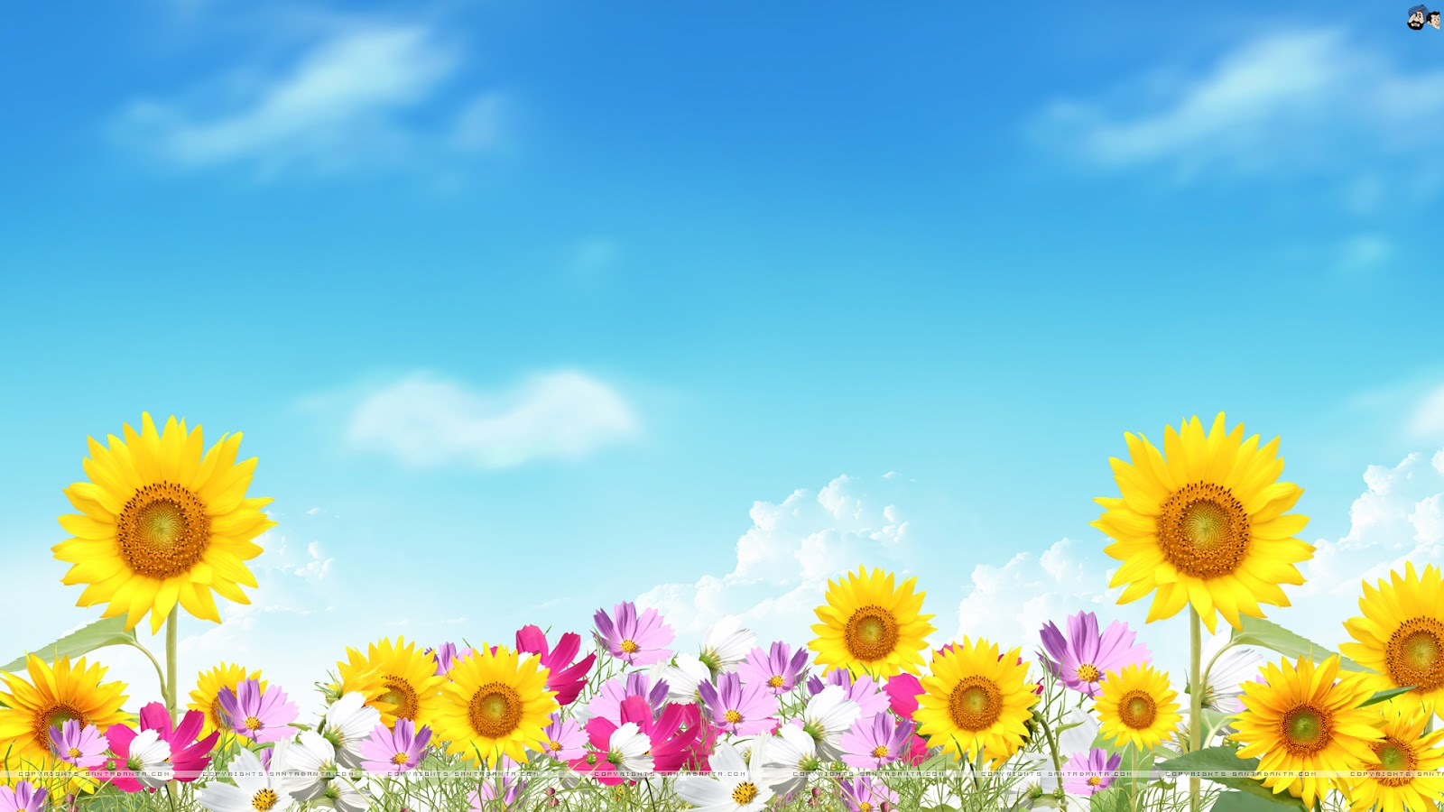 Summer Wallpapers For Desktop