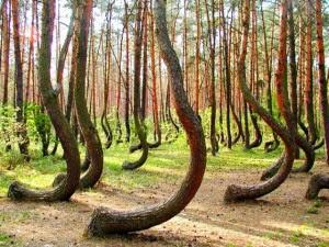 Ρωσία: το μυστήριο δάσος του Ryazan [Βίντεο]