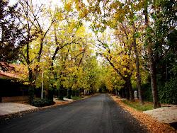 Otoño en la calle Delhez