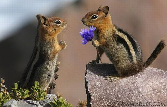 Cute Animal Couples