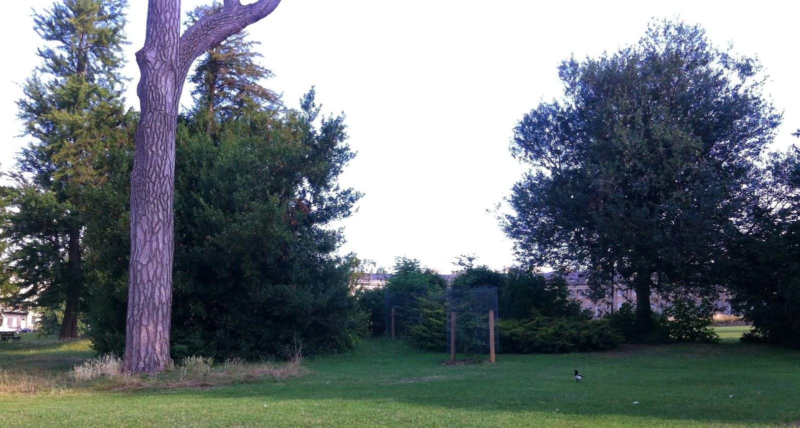 Long grass, Royal Victoria Park, Bath, distant magpie