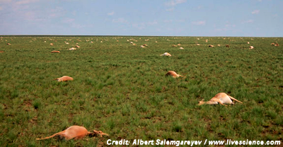 Mysterious Death of 60,000 Antelopes Remains Unexplained