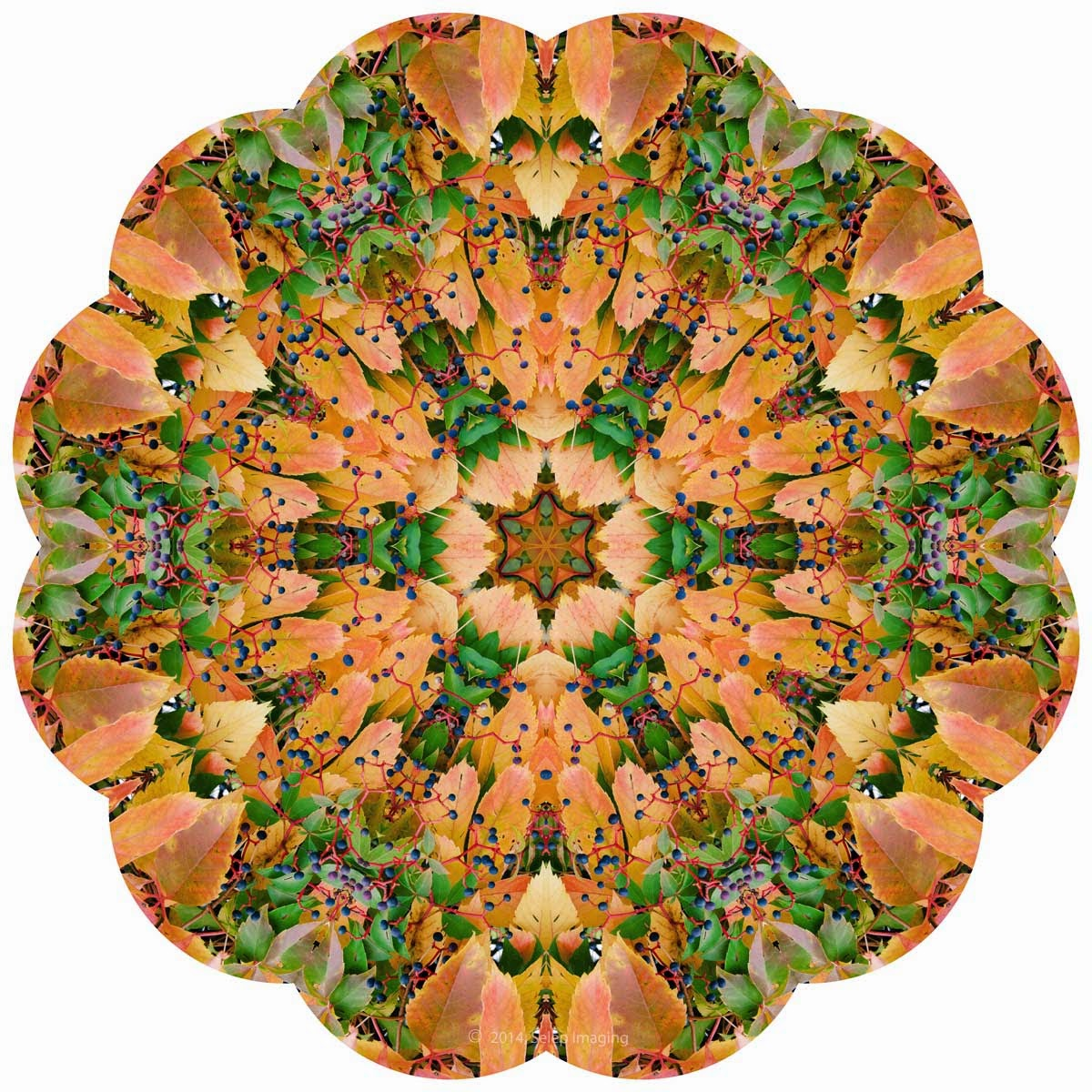 Kaleidoscope Photo Art fall foliage by Jeanne Selep