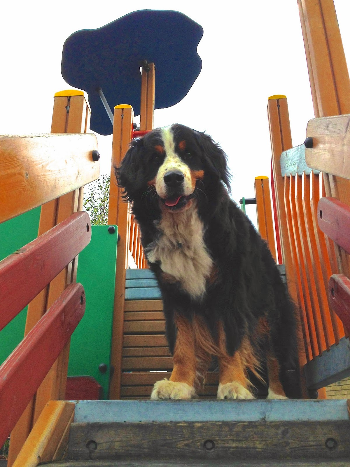 Mattie at the playground
