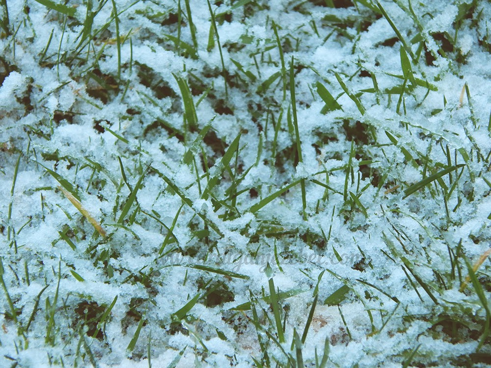 Snow cover green grass