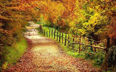 Caminito rural durante el otoño y las hojas de los arboles