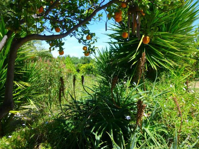 Orange Grove Portugal
