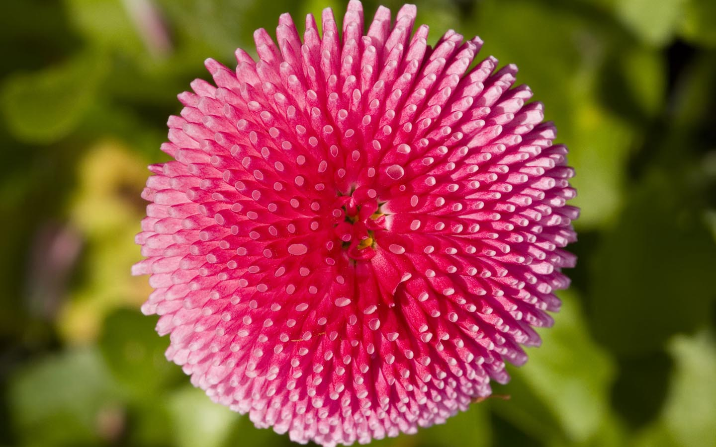 http://4.bp.blogspot.com/-YJT84OK4Aik/UCncnf_9v0I/AAAAAAAAI7Y/prRCcc7BT-Y/s1600/Flowers%2Bhd%2Bwallpapers%2B(13).jpg