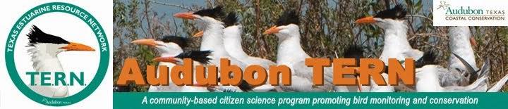 Audubon TERN