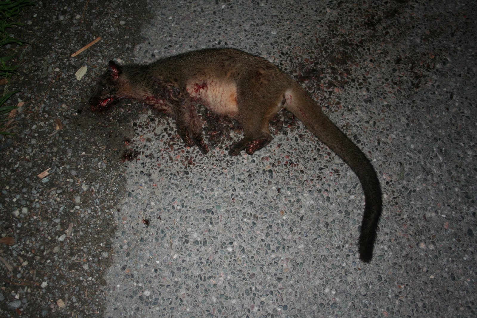WILDLIFE CRIME AND CONSERVATION : Himalayan palm Civet ...