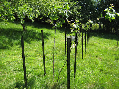 fencing fruit trees