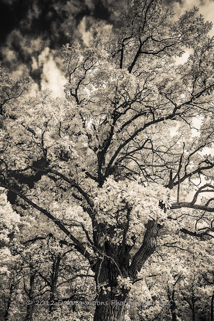 An Infrared Morning by Dakota Visions Photography LLC www.dakotavisions.com  Black Hills SD Custer State Park