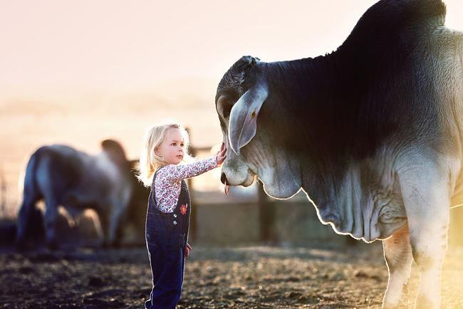 mejor amiga de los toros