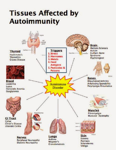 a research on thyroid disease and its effects on the human body Damage to the thyroid gland affects the body's metabolic rate  weight loss and  gain depending on the phase of autoimmune destruction of the thyroid gland.