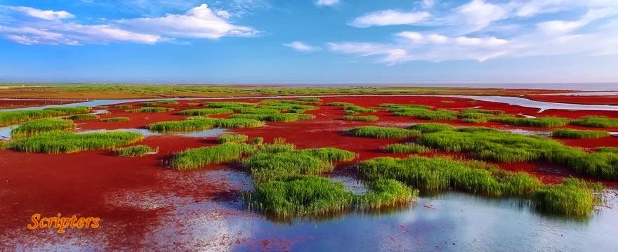 Menakjubkan Pantai Warna Merah Darah Di China