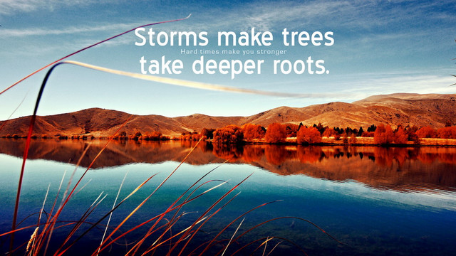 Storms make trees deeper roots.