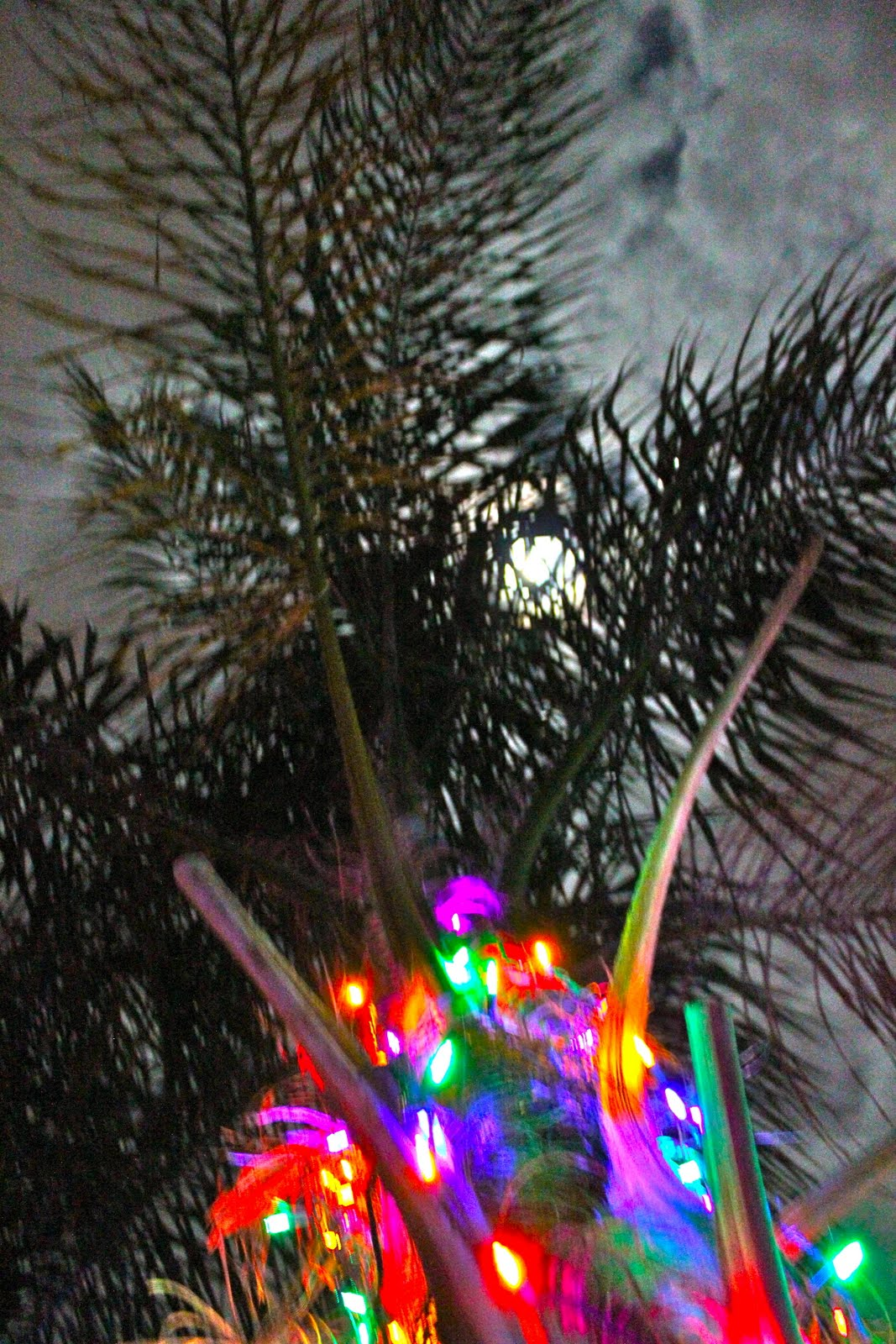 christmas lights in palm trees - Palm Tree With Christmas Lights