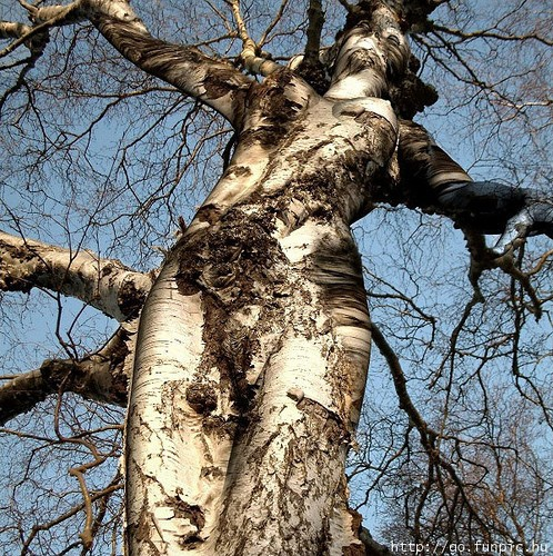 tree trunk that looks like a woman with outstretched arms