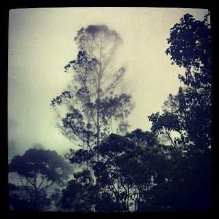 Bosque de niebla de Chicaque Colombia de una / Toya Viudes