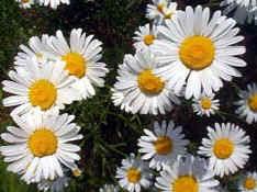 idegue-network.blogspot.com - Bilangan Fibonacci Misteri Angka Tuhan