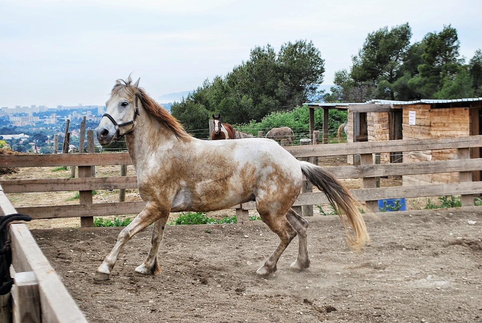 Balade à cheval, equitation, Ranch, Allauch, bon plan marseille