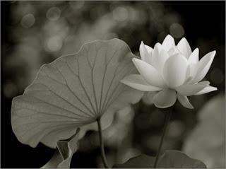 Hình Avatar đẹp cho Facebook - Avatar FB