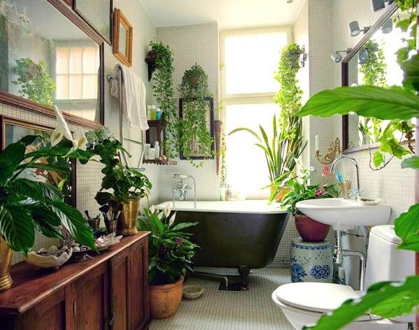 taller plantas de interior