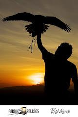 Percílio e o Falcão
