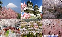Tour Du Lịch Nhật Bản Khởi Hành Tháng 5-6-7 Tour+du+lich+hoa+anh+dao+nhat+ban