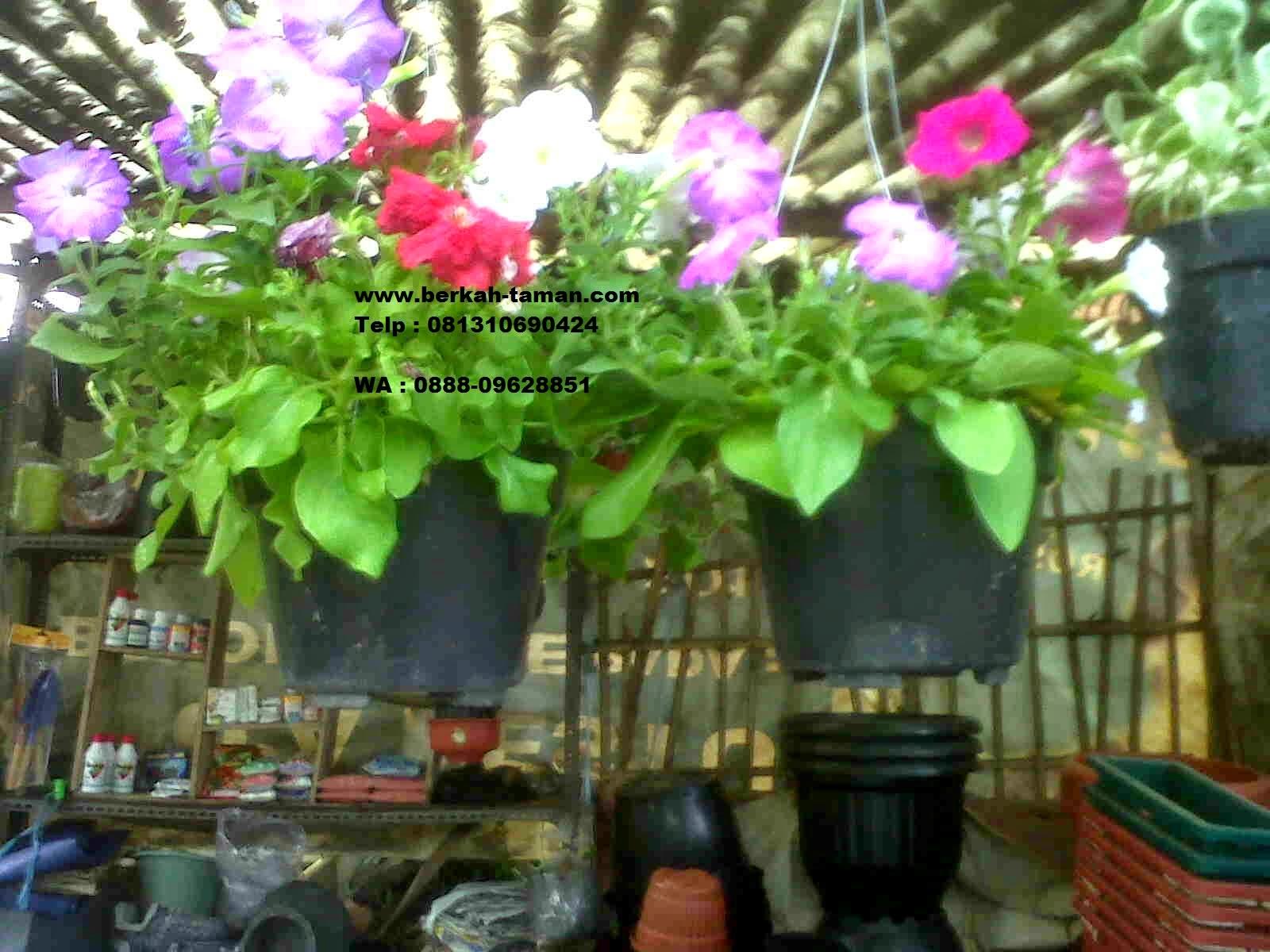 tanaman gantung hidroponik