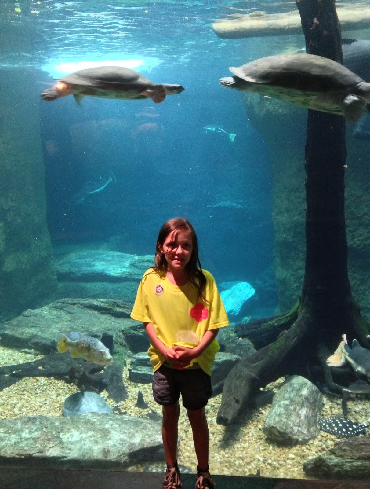 Half A Dozen Vosses Dallas World Aquarium