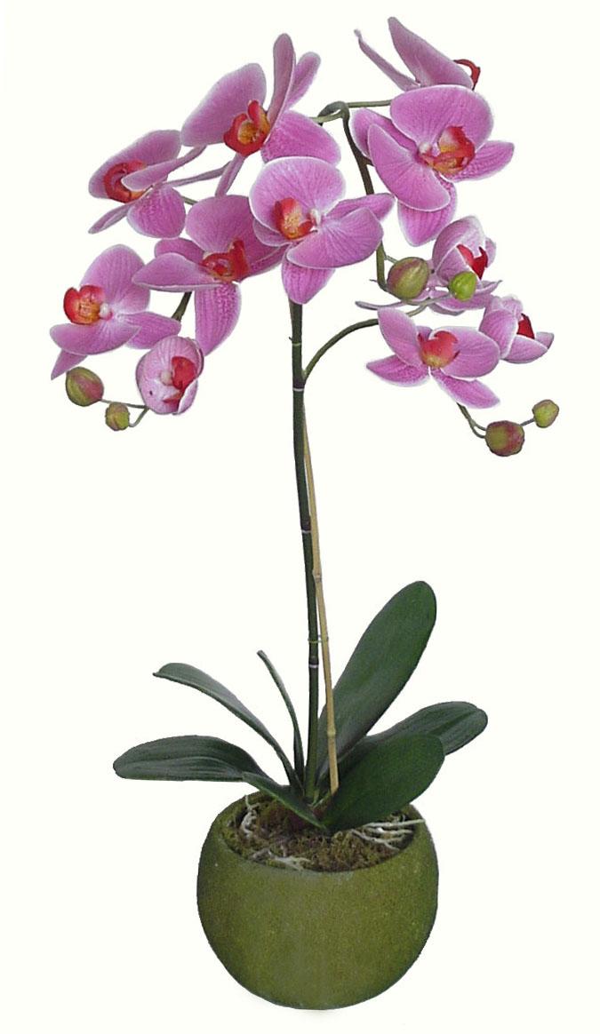 Piante ornamentali for Nuovo stelo orchidea