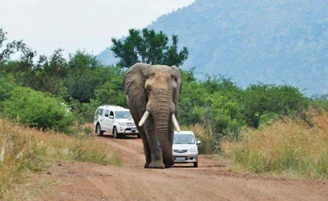Elephant's Attack on Car
