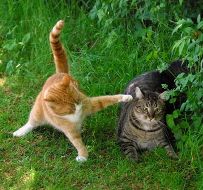 Funny-Animals-Cats-Fighting-Cute