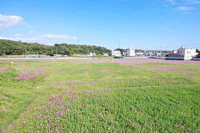 flowers, Cosmos, fields