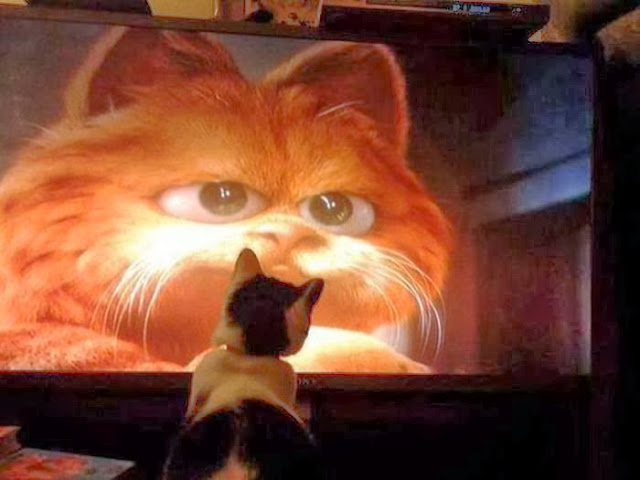 Funny cats - part 85 (40 pics + 10 gifs), cat watches Garfield on tv